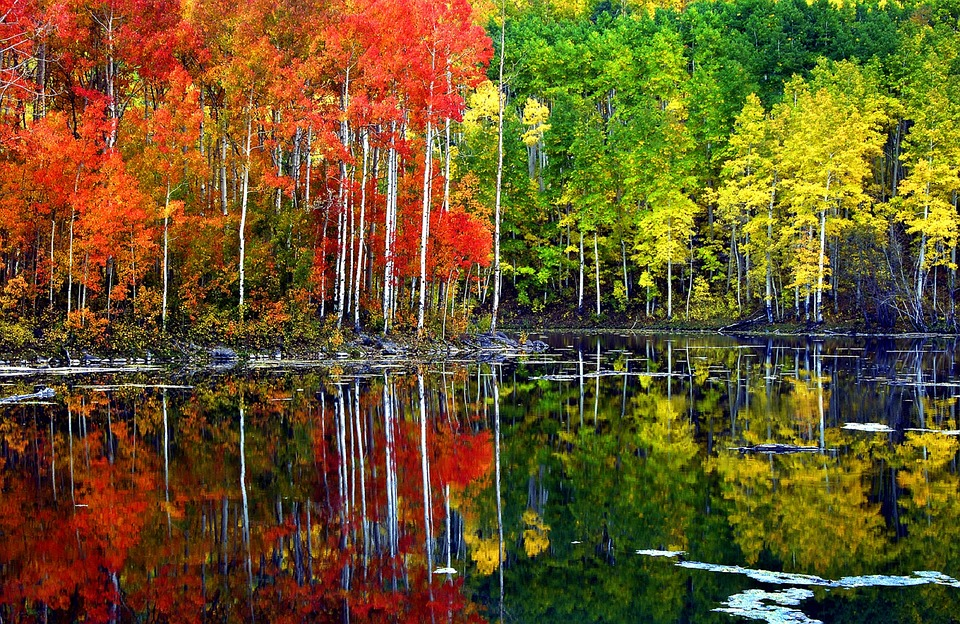 trees on a lake half fall half spring colors