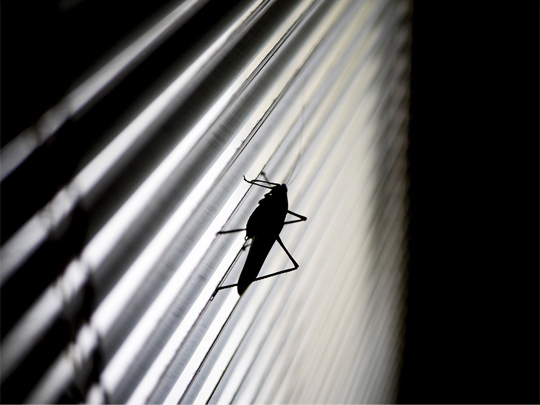 grasshopper, bugs, blinds, gross