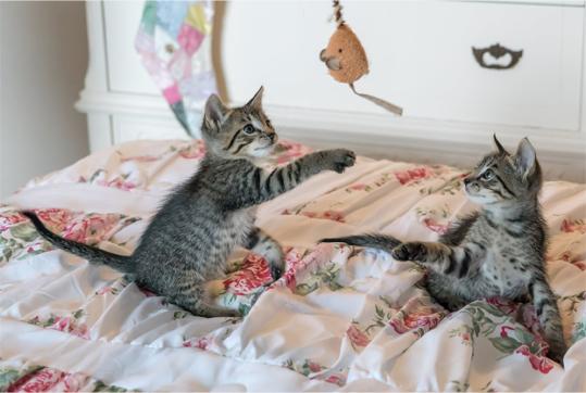 pets, smells, pet, cats, play
